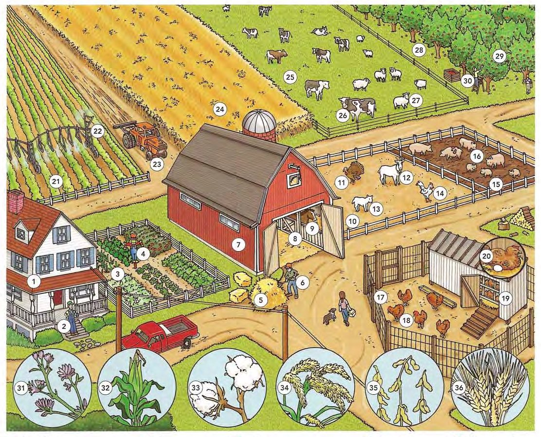 The Farm and Farm Animals